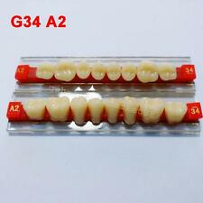 Acrylic resin teeth tooth loss denture study occlusal morphology model G34 A2