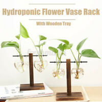Glass Flower Vase Hydroponic Tabletop Plant Bonsai Pot Wooden Stand Home