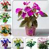 200 Pcs Seeds Flower Anthurium Bonsai Balcony Potted Plant Anthurium Flower Rare