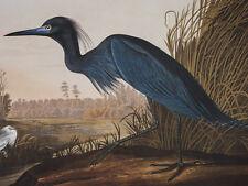 Audubon - Blue Crane or Heron - Birds of America - Elephant FOLIO - Ariel Press