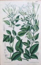 Antique (Pre-1900) White Botanical Art Prints