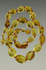 Genuine Baltic Amber Necklace 34.2g 80726-2 Clear Olive Beads all Fossil Insects