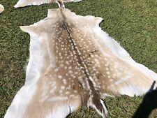 1 X Fallow Deer Skin floor rug art craft antlers horns skull 110-130cm Long