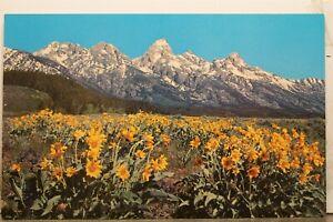 Wyoming WY Grand Teton National Park Peaks Postcard Old Vintage Card View Postal