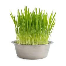 Cat grass - Hard Red Wheatgrass Seeds - 3 ounces