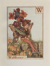 Flower Fairies: Alphabet W for Wallflower Vintage Print Cicely Mary Barker