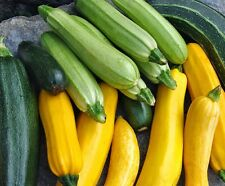 Zucchini Heirloom Trio Colour (20 Seeds)  - Organic  from Life-Force Seeds