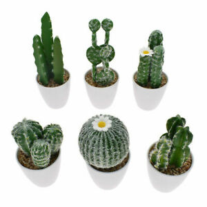 Artificial Potted Succulents Fake Plant Cactus Plant Kids Bedroom Home Ornament