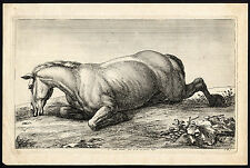 Antique Master Print-HORSE-INJURY-WOUNDED-Huchtenburgh-vd Meulen-Le Brun-ca.1690