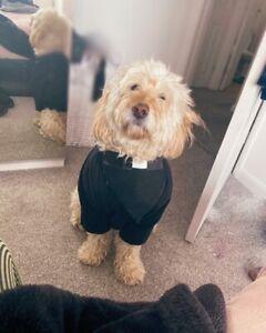 Handmade Dog Vicar Dog Collar Bandana - Neckerchief or Slide on Collar style