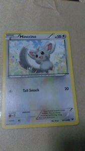 Minccino Pokemon Card COMMON [FATES COLLIDE]