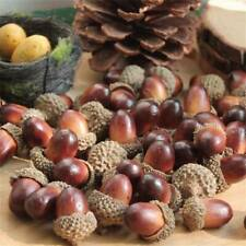 10PC Assorted Natural Acorns W/ Caps, Fall Decor, Thanksgiving, Craft Supplies