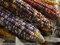 🔥 🌽 WAMPUM bunter Indianer-Mais * zum kochen und grillen * 6 Samen