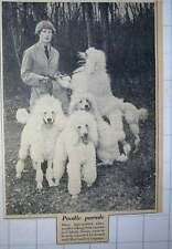 1956 Kennel Maid Miss Cambrey Coppage With A Handful Of Poodles Uckfield Sussex