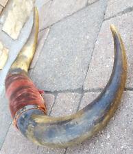 """Steer Horns Bull Horns Cow Taxidermy Man Cave Decor-14""""-Velvet Mount-Vtg-Distres"""