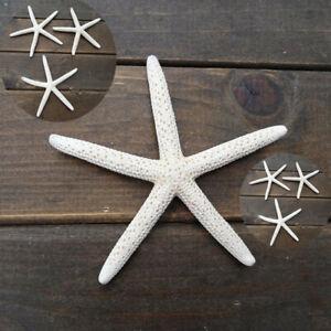 "12Pcs Sea Star 2""-4"" Natural White Starfish Finger Great Wedding Decoration"