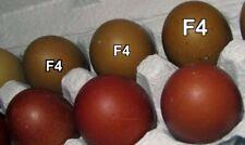6+ Olive Egger Hatching Eggs- F3-F4