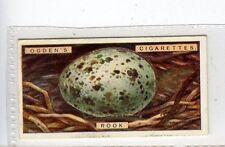 (Jc2989-100)  OGDENS,BIRDS EGGS,ROOKS EGG,1923,#33