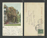1904 GOLD OF OPHIR ROSE BUSH CALIFORNIA UDB UNDIVIDED BACK POSTCARD