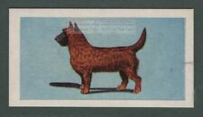 Cairn Terrier Dog Canine Pet Animal Trade Ad Card