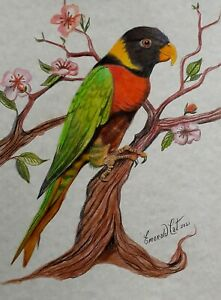 BIRD DRAWING PRINT LORIKEET - By Australian artist Emerald Cat
