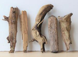 Treibholz Schwemmholz Driftwood 5 Hölzer Terrarium Dekoration Ostern 29 - 32 cm