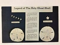 "The Legend of the Holy Ghost Shell ""Mellita Testudinata"" Postcard"