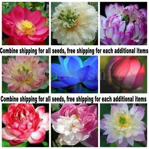 Multi-variety Lotus Seeds Nelumbo Nucifera Aquatic Water Plant Combine shipping