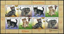 2017 Belarus, pets, cats, kittens, mini sheet, MNH