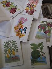 Lot 24 Color Illustrations Botany Plants Flowers of Australia Exotic Fruits