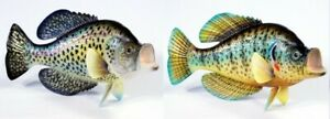 "Hand Painted 15"" Crappie Standing Game Fish Replica Sculpture Figurine Statue 80"