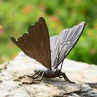 """Large Butterfly Garden Sculpture Metal Statue Yard Pool Pond Decor Outdoor 8.5""""W"""