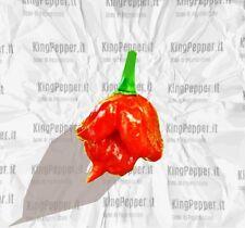Trinidad Scorpion Butch T 10 Semi Peperoncino 2° COME PICCANTEZZA AL MOND
