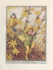 Flower Fairies: The Winter Jasmine Fairy Vintage Print c 1930 Cicely Mary Barker
