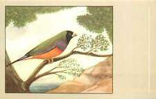Blackheaded gouldian finch bird postcard