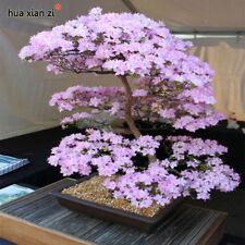 Giapponese SAKURA semi bonsai fiore di ciliegio ciliegio pianta ornamentale