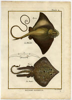 Antique Fish Print-THORNBACK RAY-COMMON EAGLE RAY-Bonnaterre-1788
