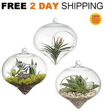 3 Air Plant Terrarium Glass Hanging Planter Candles Flowers Plant Pots Container