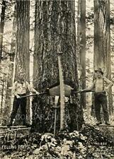 LOGGERS SPRING BOARDS SAW LOGGING SILVERTON OR  PHOTO