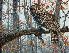 Cross Stitch Kit Dimensions Woodland Wise Owl Perched on Branch #70-35311