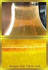 Vinegar Eels (8 Full OZ) Live Food For Tiny Fish Fry, Invertibrates and Corals