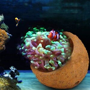 Aquarium Anemone Nest Reef Tank Prevent Running Away Clay Live Rock Kit Supplies