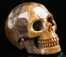 """2.0"""" PETRIFIED WOOD Carved Crystal Skull, Realistic, Crystal Healing"""