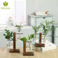 Terrarium Glass Hydroponic Plant Vase Transparent Flower Pot Wooden Frame  *