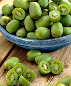 CHINESE KIWI BERRY HUNDREDS OF MINI KIWI FRUIT FULLY HARDY EDIBLE SKINS 10 SEEDS