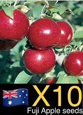 10x Fuji Apple Seeds Fruit Vegetables Garden Plant