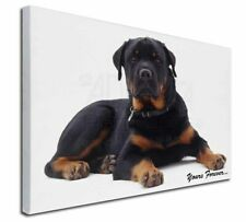 More details for rotweiler dog 'yours forever' x-large 30