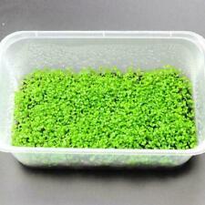 Magic Seeds Aquarium Plant Fish Tank Aquatic Water Grass Easy Plants 5g