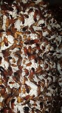 3000 - 3600 Turkistan Roaches ( Shelfordella 'Blatta' lateralis ) - LIVE FOOD!