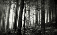 Framed Print - Gothic Black & White Spooky Forest (Picture Poster Haunted Art)